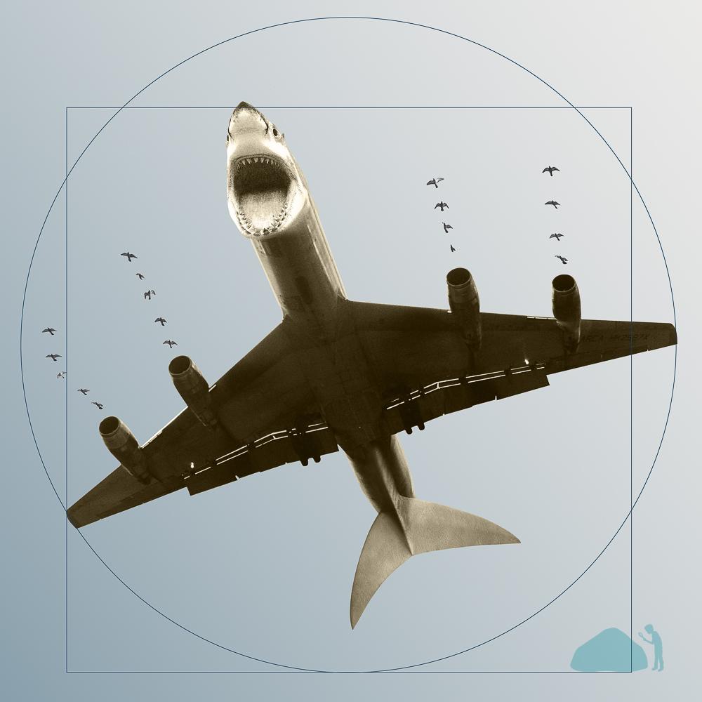 Shark-Bus